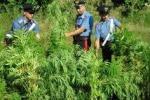 Scoperta piantagione canapa e 28 chili di droga