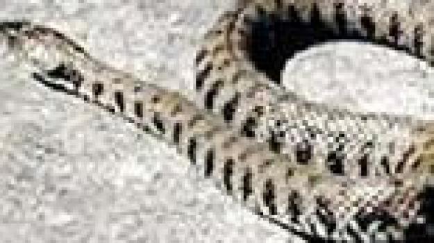 s.stefano camastra, serpente, Messina, Archivio