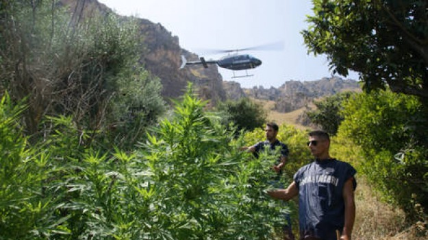 filandari, marijuana, piantagione, Catanzaro, Calabria, Archivio