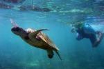 Tartarughe marine e cetacei in aumento