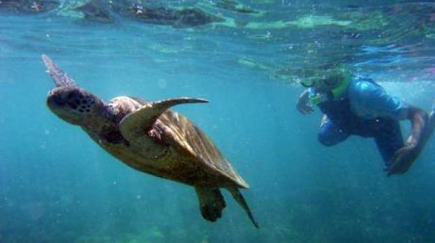 cetacei, eolie, tartarughe marine, Sicilia, Archivio