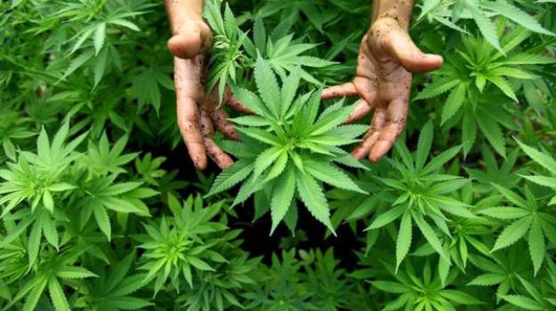 cannabis, Messina, Archivio