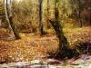 Reggio, cercatore di funghi scomparso: il prefetto attiva il Piano Provinciale
