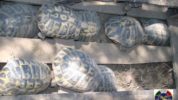 tartarughe, Messina, Archivio