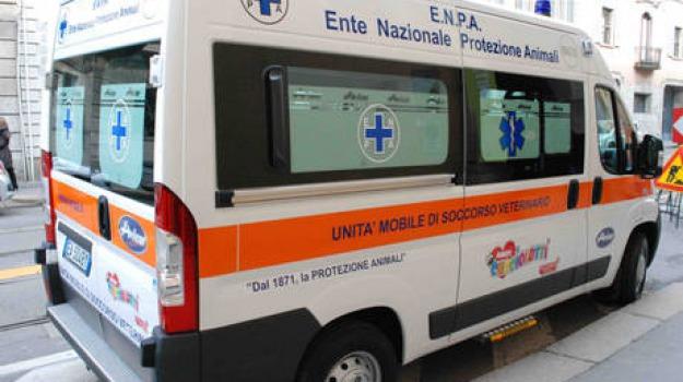 autista, minibus, schiacciata, sportello, Sicilia, Archivio, Cronaca