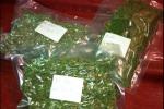 Serra San Bruno, in autobus con un 170 grammi di marijuana: un arresto