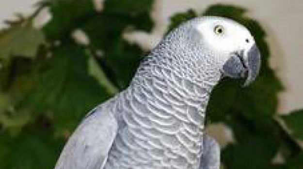 bimbo, pappagallo, polizia, Sicilia, Archivio, Cronaca