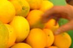 Sventato furto in un aranceto di Francavilla, è caccia ai responsabili