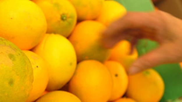 arance e grano, aziende catanesi, centri terremotati, donati, umbria, Sicilia, Archivio