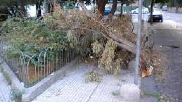 forestale, luigi croce, pippo previti, potatura alberi, Messina, Archivio