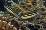 Riparte il progetto ripopolamento ittico