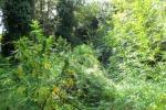 Piante di marijuana in un'oasi del Wwf