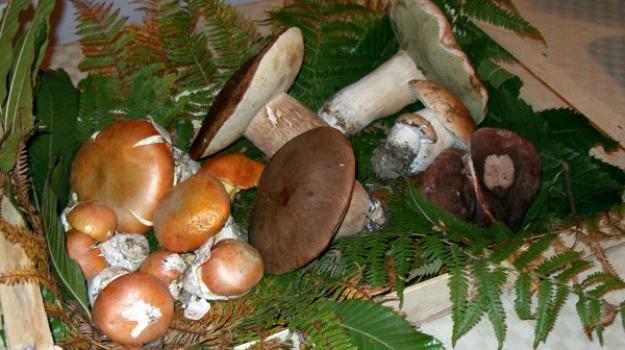 funghi velenosi, Sicilia, Archivio, Cronaca