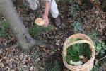 Funghi velenosi morti padre e figlia