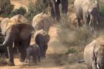 Troppi elefanti, via al contraccettivo