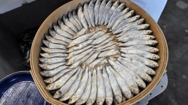 contaminato, denunciato, pesce, ristorante, Sicilia, Cronaca