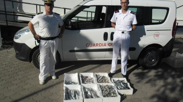 capitaneria porto corigliano, operazione october fish, sequestro pescato, Calabria, Archivio