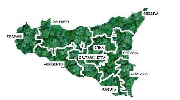 elezioni politiche, movimento 5 stelle, Sicilia, Archivio
