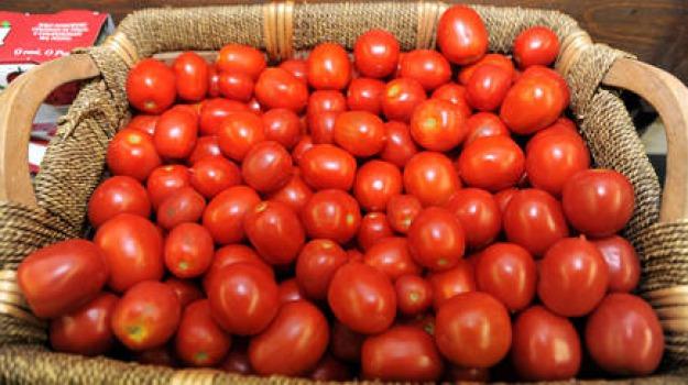 in italia, produzione pomodori, sicilia prima, Sicilia, Archivio