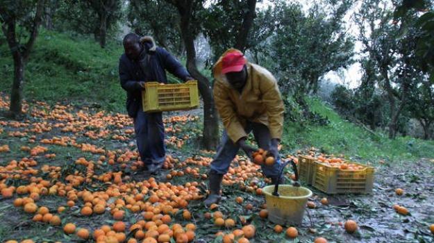 agricoltura, camigliatello silano, confisca, sequestro, Cosenza, Calabria, Archivio