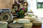 Laboratorio abusivo per produrre formaggi con latte ovino