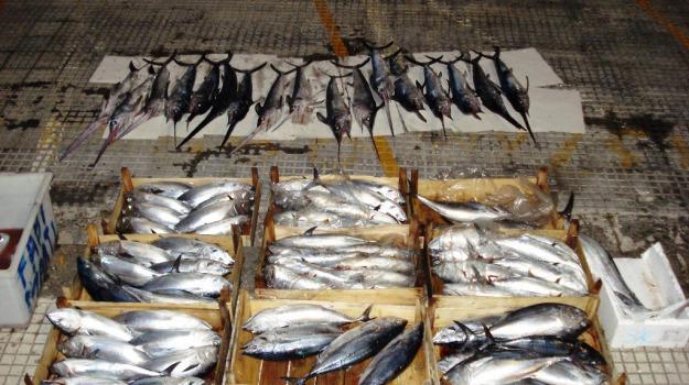 corigliano calabro, cosenza, pesce, sequestrato, Calabria, Archivio