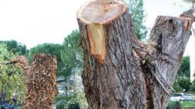 potatura alberi messina, Messina, Archivio