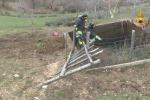 Mucca cade nella vasca salvata dai vigili del fuoco