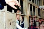 Carceri, in gioco l'onore dell'Italia