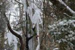 11enne colpita da ramo in prognosi riservata