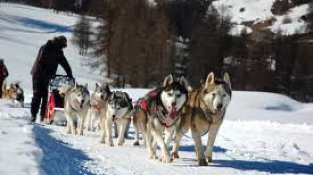 carlomagno, dogs on the snow, musher, parco sila, sleddog, Calabria, Archivio