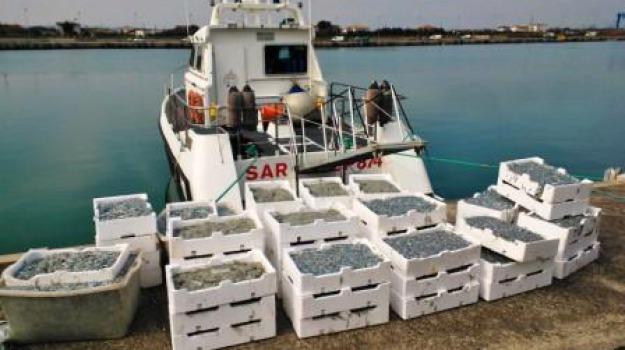 capitaneria porto, corigliano, novellame, sequestro, Calabria, Archivio