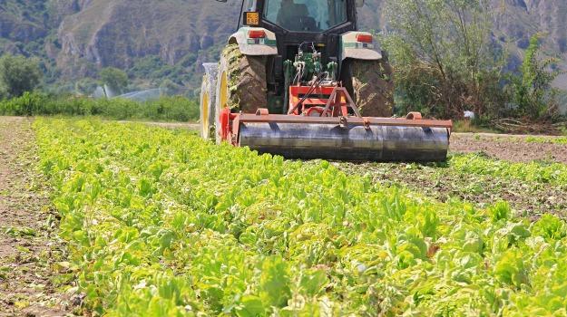 aziende agricole, confagricoltura, furti, Cosenza, Calabria, Archivio
