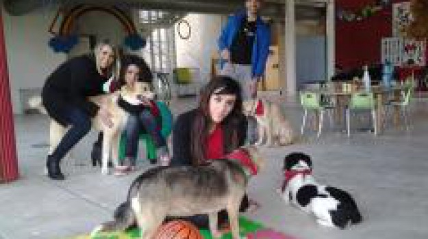associazione, cosenza, pet terapy, Cosenza, Archivio