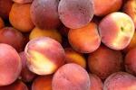 Meglio regalarla che buttarla, Coldiretti Calabria regala frutta estiva per combattere il caldo