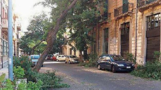 albeo caduto, Messina, Archivio