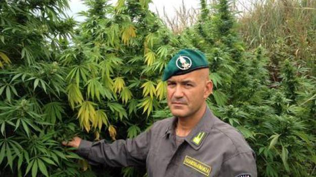 marijuana, palmi, seqeustro, Reggio, Calabria, Archivio