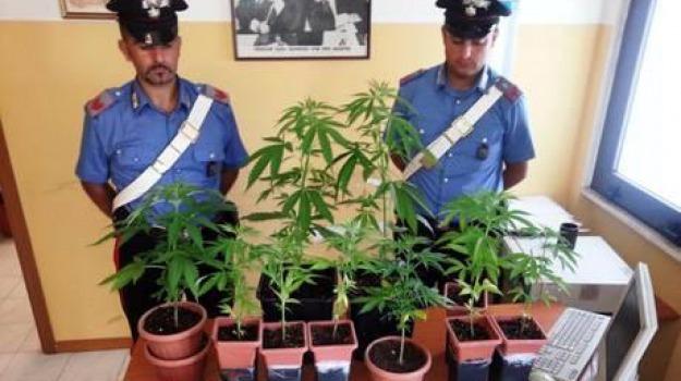 coltivava marijuana, Catanzaro, Calabria, Archivio