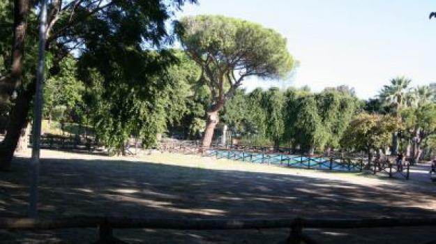 festa dell'albero, Messina, Archivio