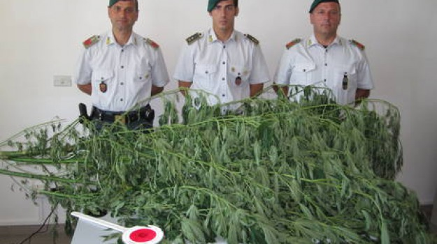 canapa indiana, cocaina, crotone, sequestro, Catanzaro, Calabria, Archivio
