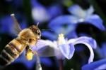 Punto da una vespa muore 51enne