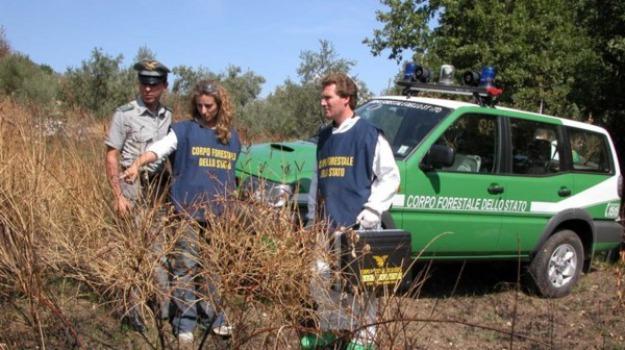 arresti, corpo forestale, furto legna, sila, Calabria, Archivio