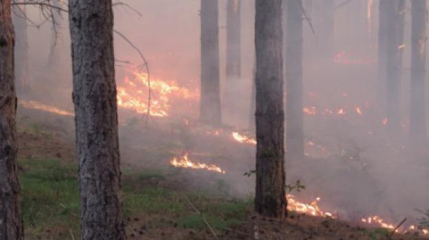 incendi, polizia provinciale cosenza, sila, Calabria, Archivio