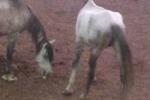 Cittadini e M5S salvare animali Parco Robinson