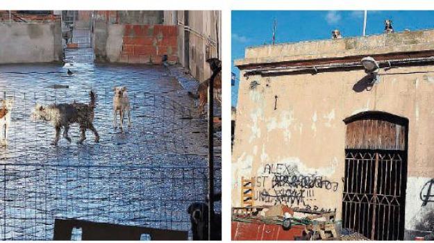 canile ex macello, Messina, Archivio