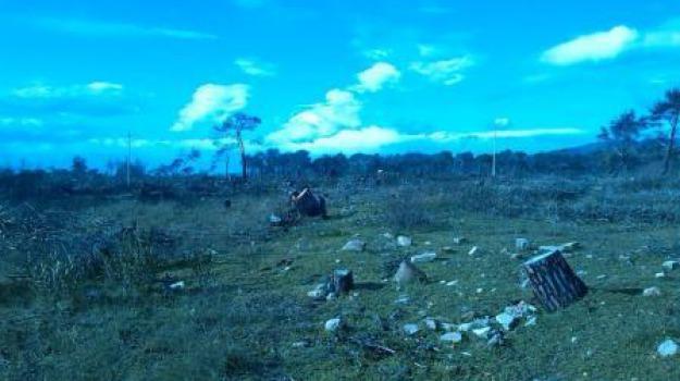 corpo forestale, denunce, sequestro, taglio legna, villapiana, Calabria, Archivio