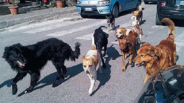 cani, Messina, Archivio