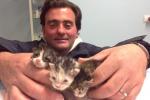 Salva tre gattini in un cassonetto