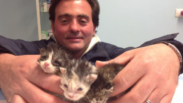 gattini, perugia, salvati, Sicilia, Cronaca