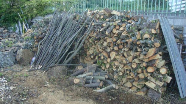 aieta, furto di legna, Sicilia, Archivio